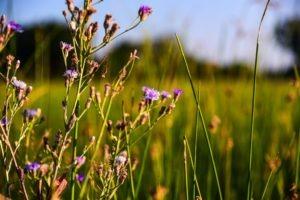 Botswana Kwapa Camp flowers