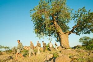 ET Baobab walk 2