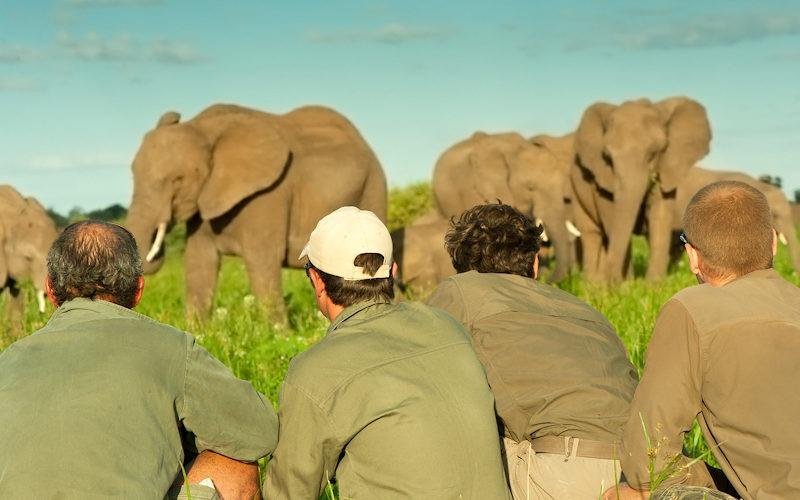 Ecotraining Elephant on foot