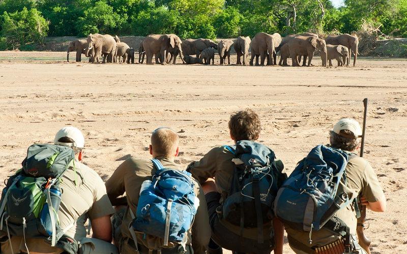 Ecotraining Elephants in rivebed