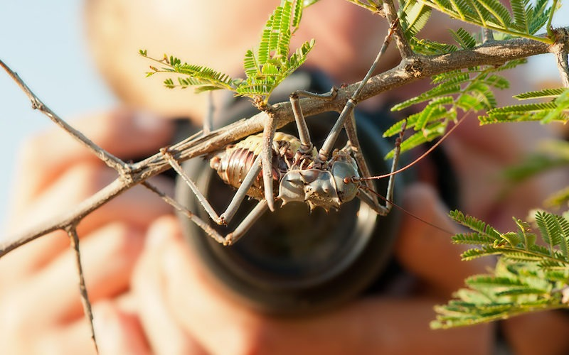 Ecotraining Phographing insect