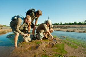 Ecotraining Tracking