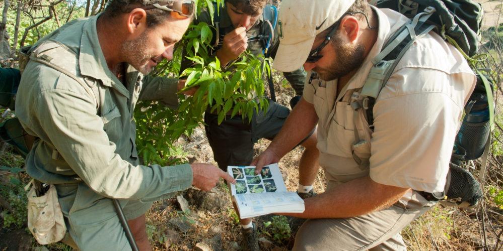 Ecotraining Tree ID