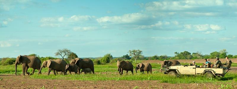 Ecotraining banner elephants