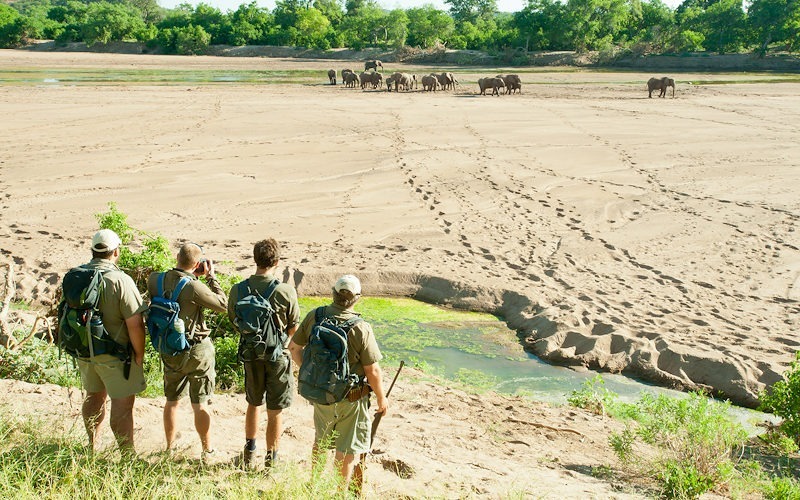 Ecotraining elephants in riverbed