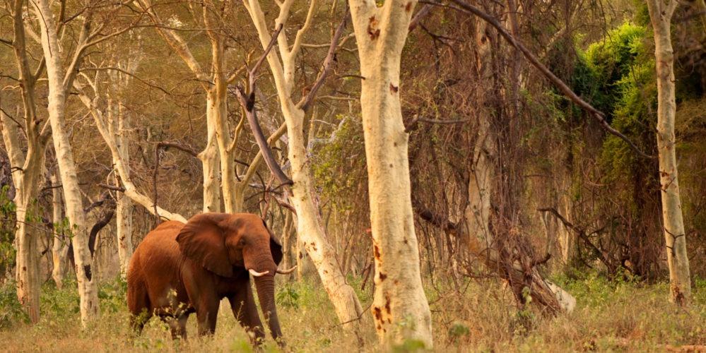Ecotraining makuleke elephant