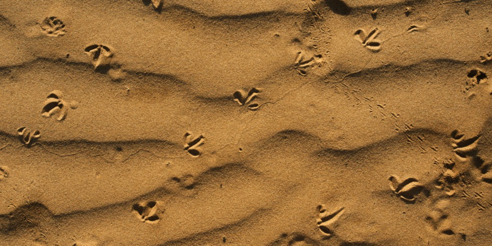 Ecotraining tracking sand various