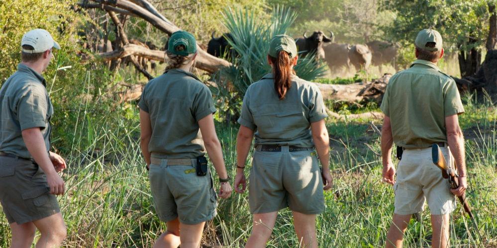 Ecotraining walking encounter