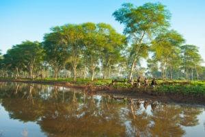 Ecotraining water walking