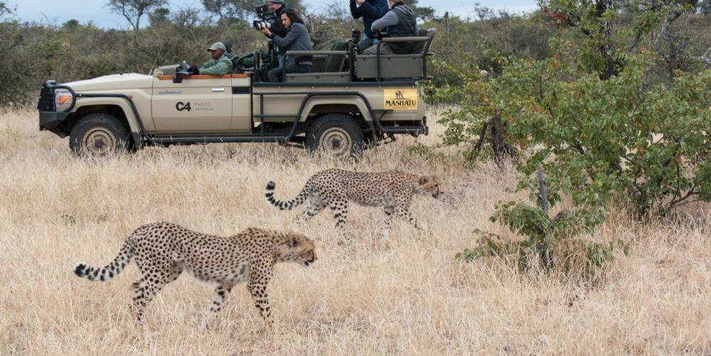Game drive cheetah sighting