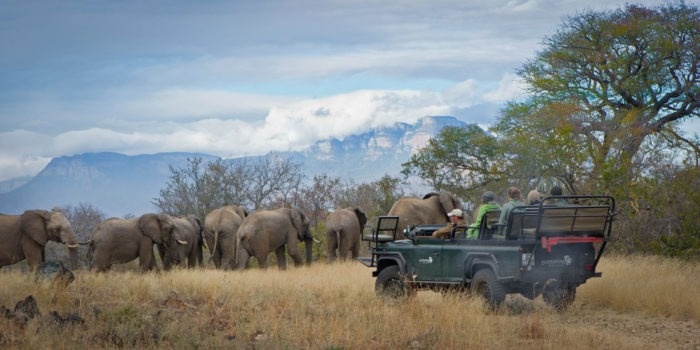Pridelands-Camp-Elephant-Herd