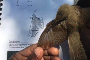 Specialist birding skills
