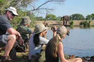 bateleur timbavati walking elephants