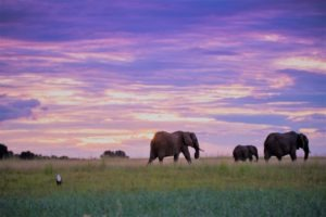 botswana elephant photo safari chobe national park