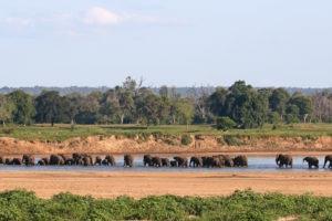 chilo gorge gonarezhou elephants