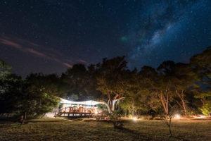 fig tree star night