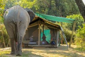 gbc elephant tent guest
