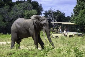 johns camp mana gamedrive elephant