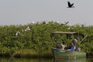 kanana heronry guests boating