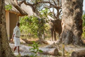 kwando lagoon camp elephant camp