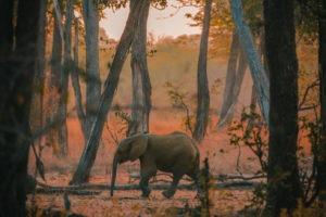 luambe camp elephant