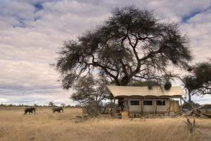 somalisa expeditions hwange tent elephants