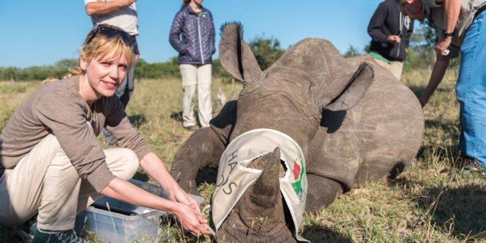 south africa rhino notching steph