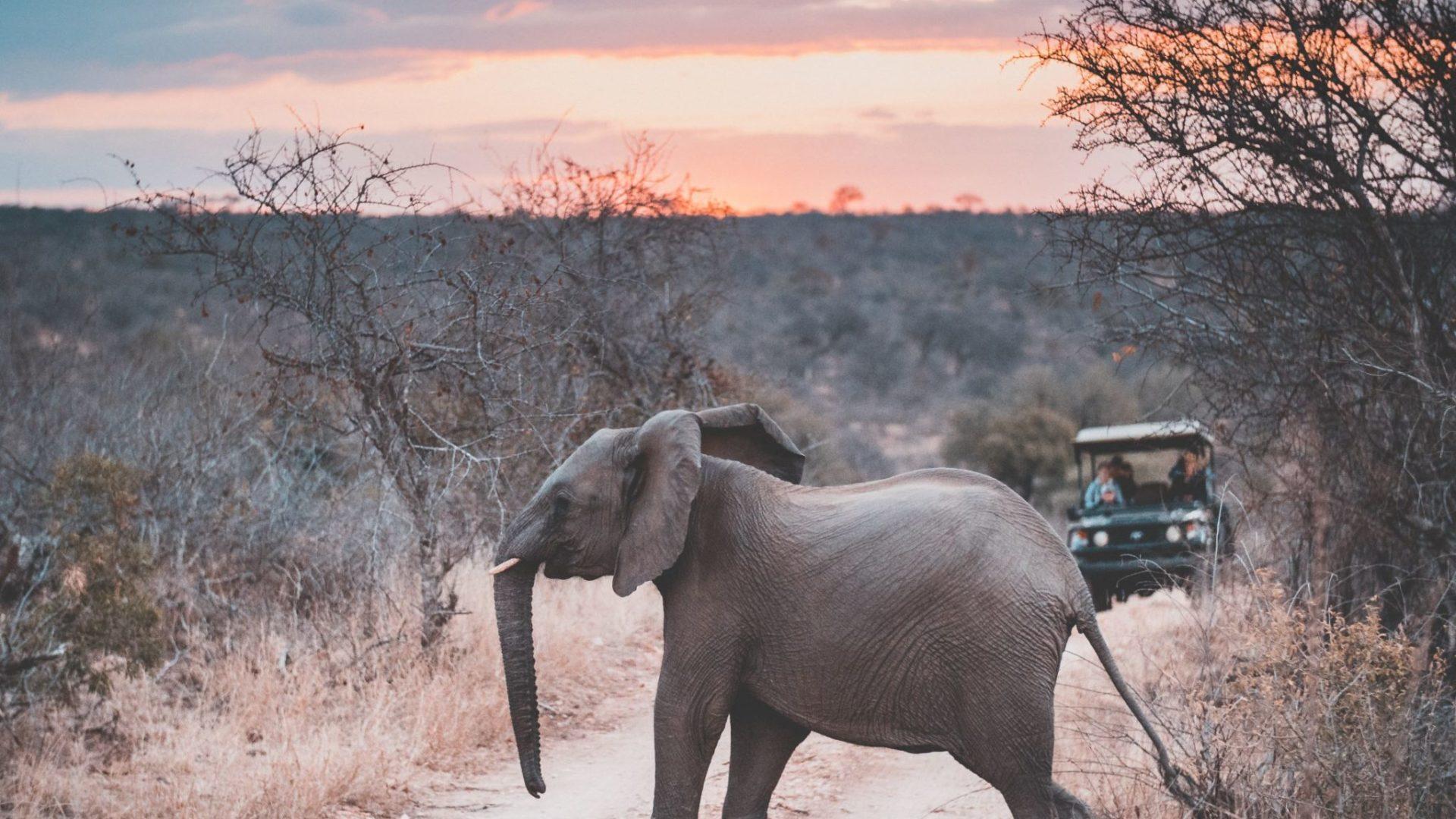 South-Africa-Elephant