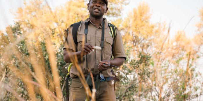 Botswana-Delta-Okwa