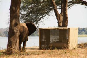 Elephant 2 in Kutali Island Camp 1