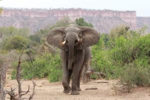 Gonarezhou buchcamps elephant wildlife