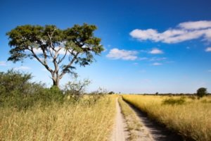 Makgadikgadi pans Kubu Island Road tracks self drive