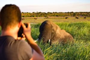 Northen Botswana Chobe Boating Photography Elephant
