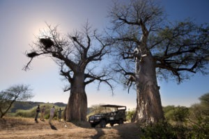 Pafuri Makuleke Kruger National Park Game Drive Safari Baobabs