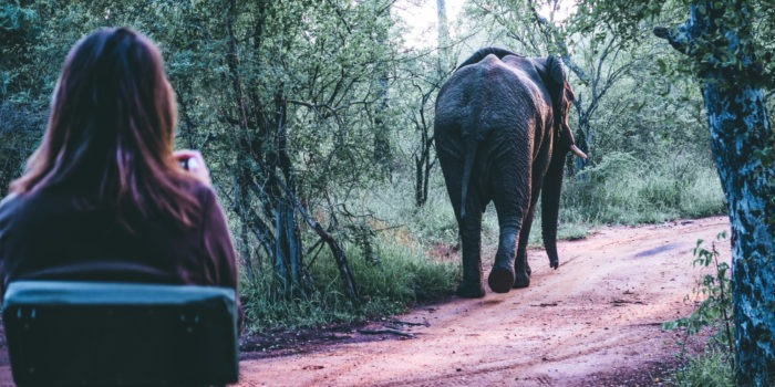 South Africa Training Karongwe Student Elephant from behind