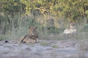 Training Selati Lions Gesa Neitzel