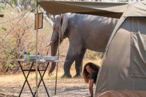 botswana mobile safari gesa tent elephant