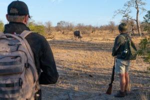 lowveld trails timbavati rhino walking guests