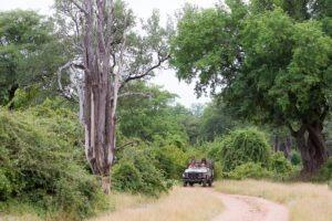 nkozi camp south luangwa game drive