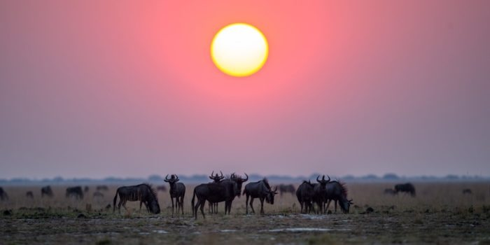 west zambia liuwa plains wildlife photography sunset wildebeest