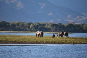 zambezi expeditions mana pools elephants