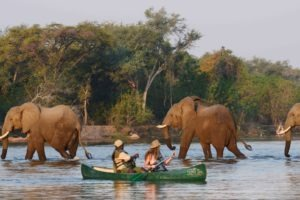 zambia lower zambezi sausage tree camp canoe big five adventure