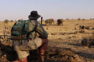 zimbabwe hwange walking safari