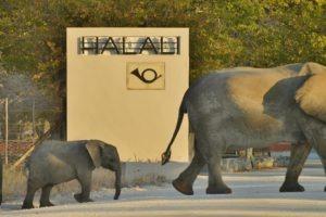Halali Elephants