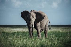 jason tanzania photo elephant