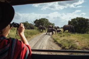 jason tanzania photo emilie elephant