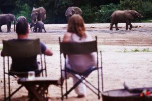 manyara green camp tanzania guests elephants