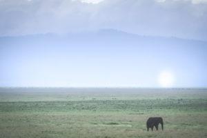 tanzania safaris elephant landscape