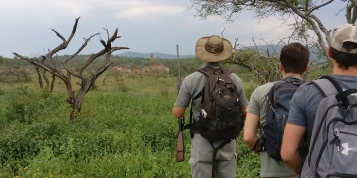 Rangerkurs Ecotraining Giraffe Jan