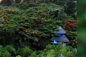 chole mjini mafia aerial tree house